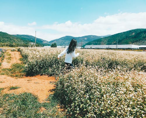 Free stock photo of blossom, field, girl in white t-shirt, hurry