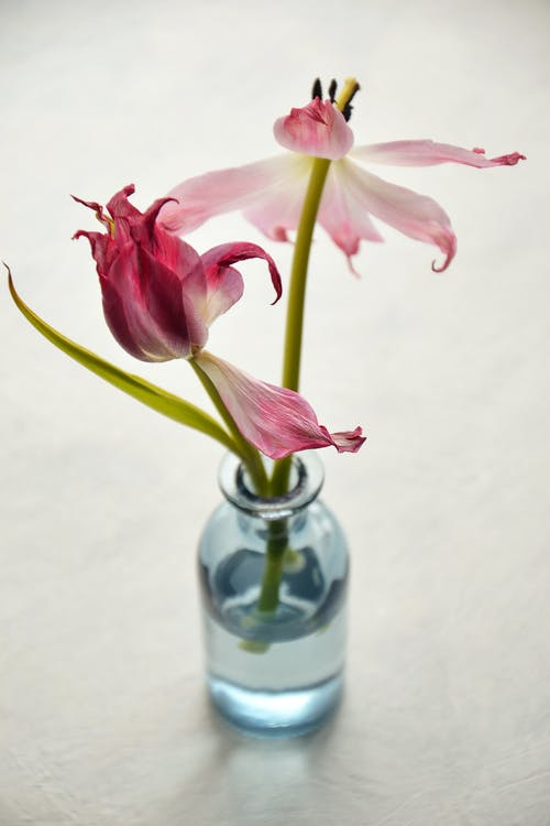 Pink Petaled Flowers On Clear Glass Vase