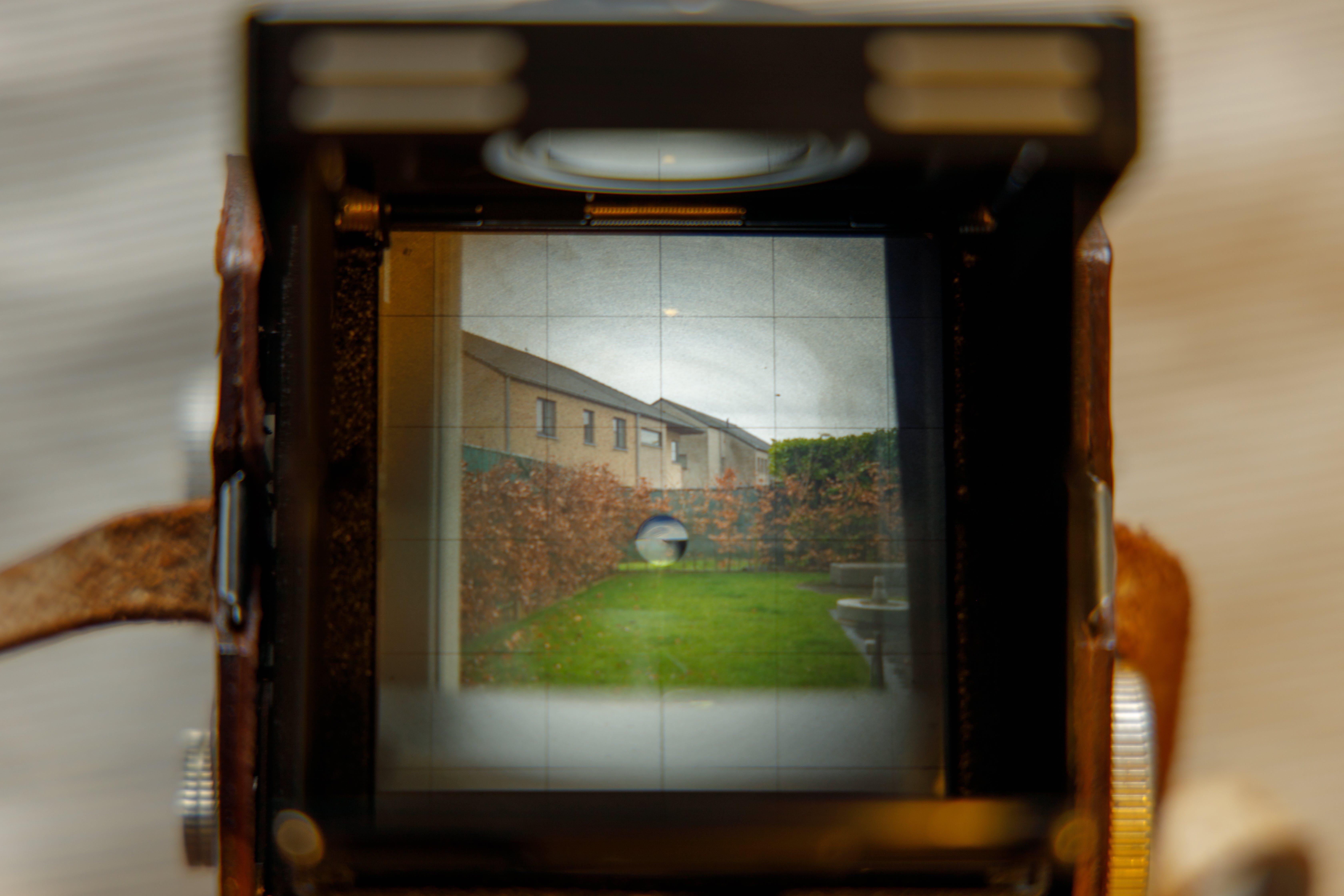 Gratis lagerfoto af analogt kamera, fægte, haag, have