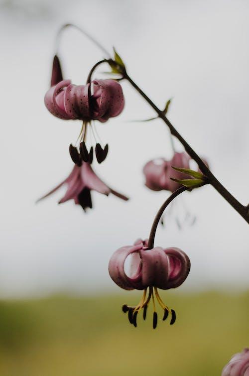 宏觀, 植物群, 綻放, 花 的 免费素材照片