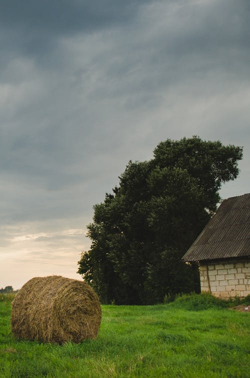 Photo of Hay on Grass Field