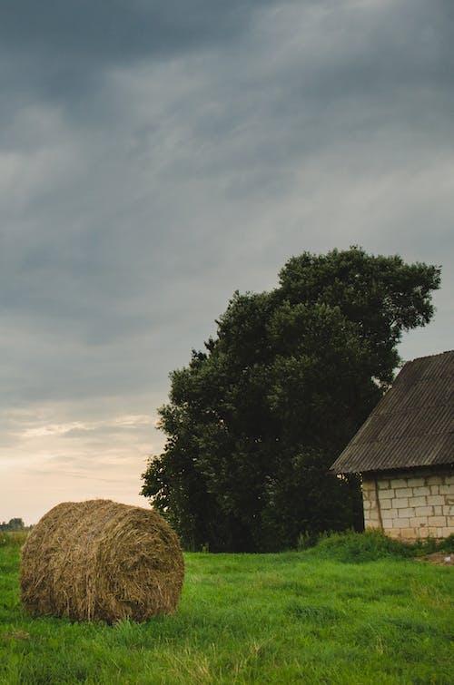 Kostnadsfri bild av fält, gräs, gräsfält, hö