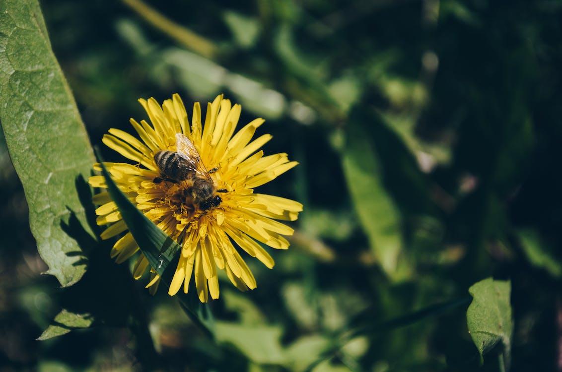 bi, blomma, natur