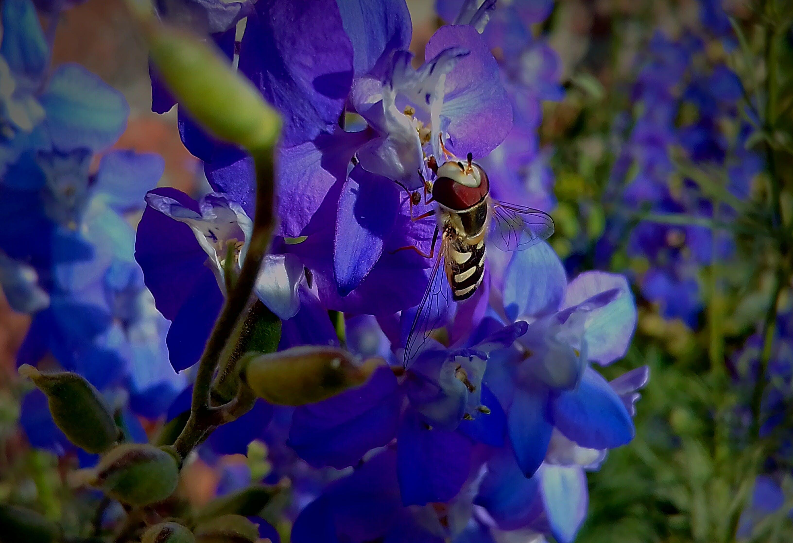 Gratis lagerfoto af 4k-baggrund, bi, blå blomster, blomst