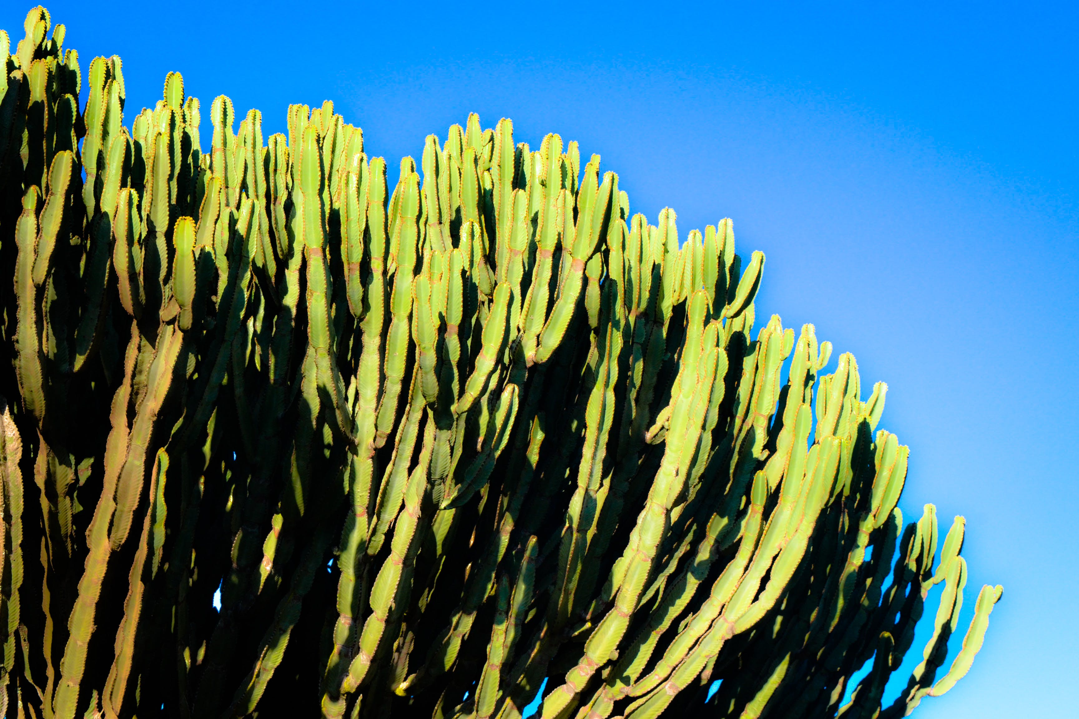 Darmowe zdjęcie z galerii z dzień, kaktus, rośliny, rośliny gruboszowate