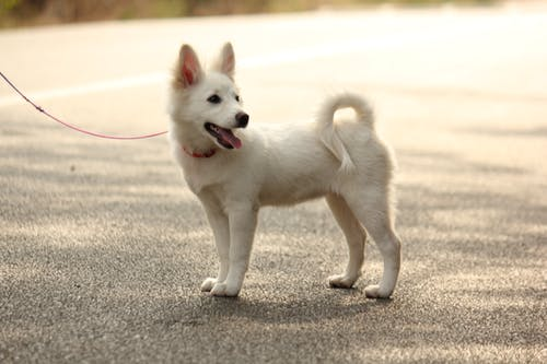 Fotos de stock gratuitas de Canon, perros, preethi