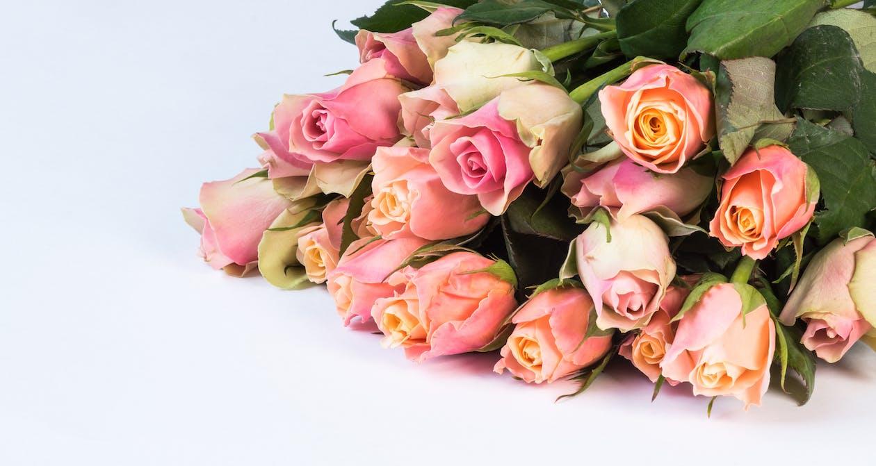기념일, 꽃, 꽃 바탕화면