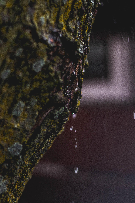 Free stock photo of drip, faded, moss, rain