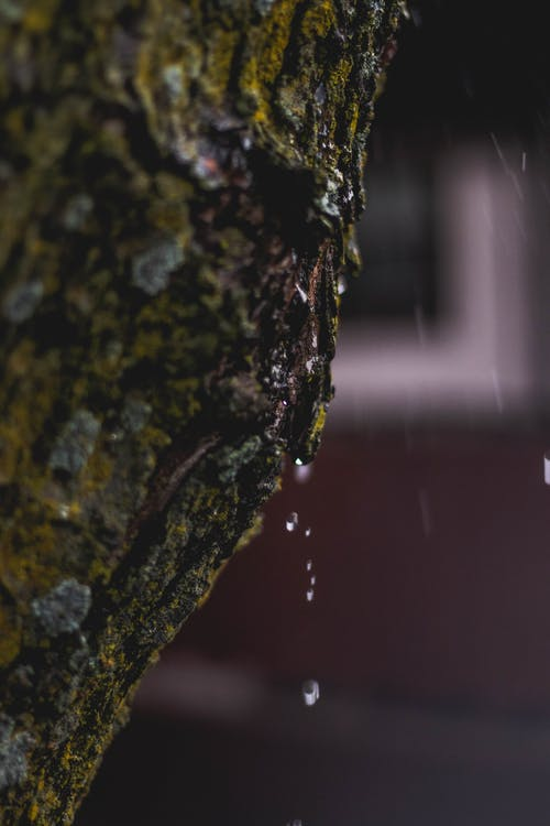 Free stock photo of drip, faded, moss