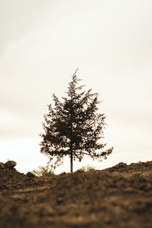 Free stock photo of bright, cloudy, dirt, lonely
