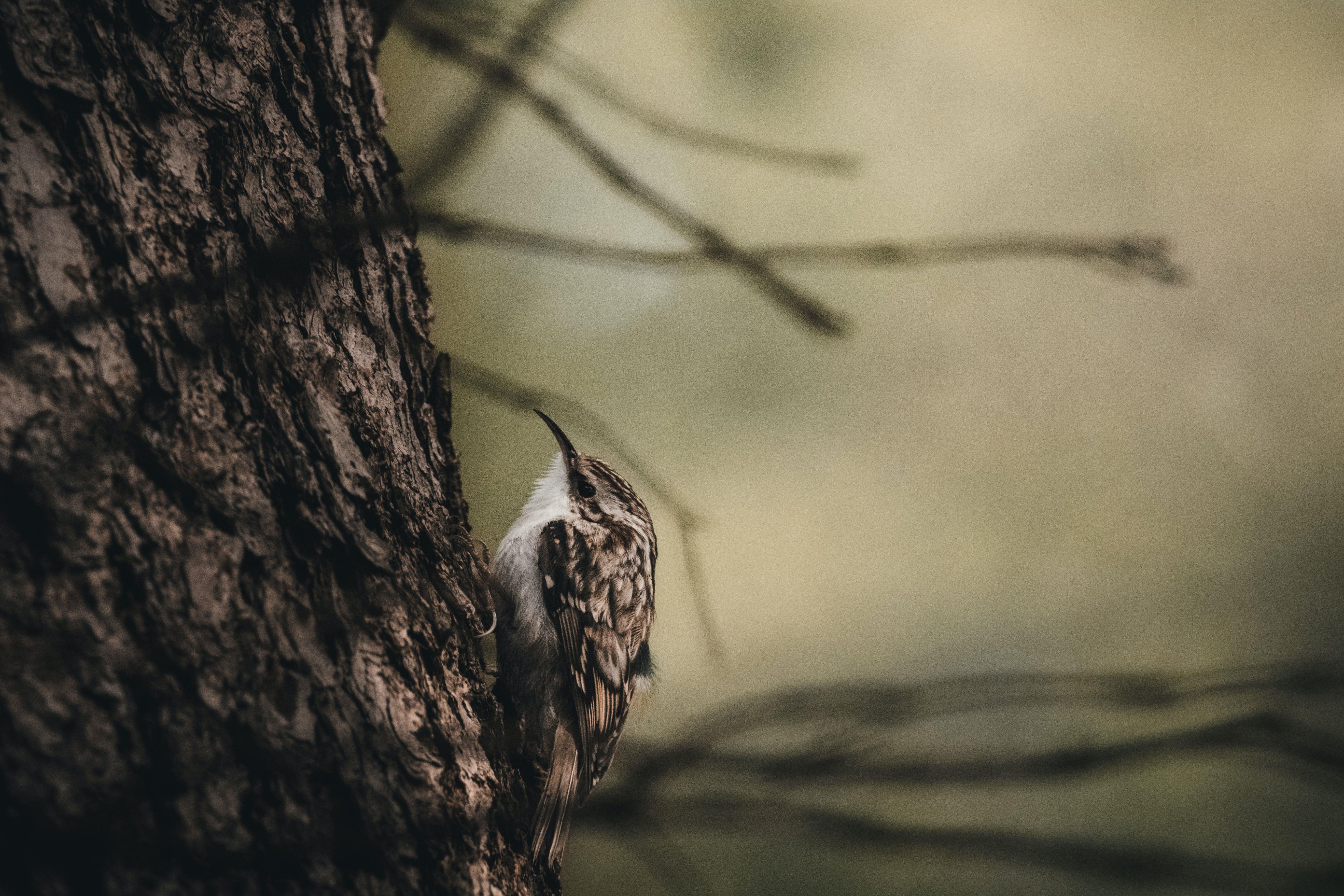Ingyenes stockfotó állat, állatfotók, aranyos, fa témában