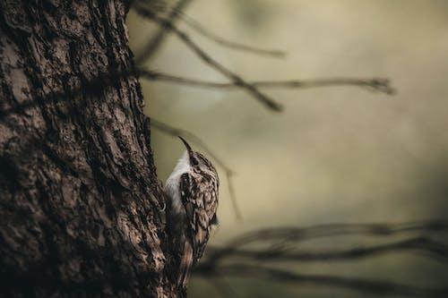 Foto profissional grátis de animal, árvore, bonitinho, close