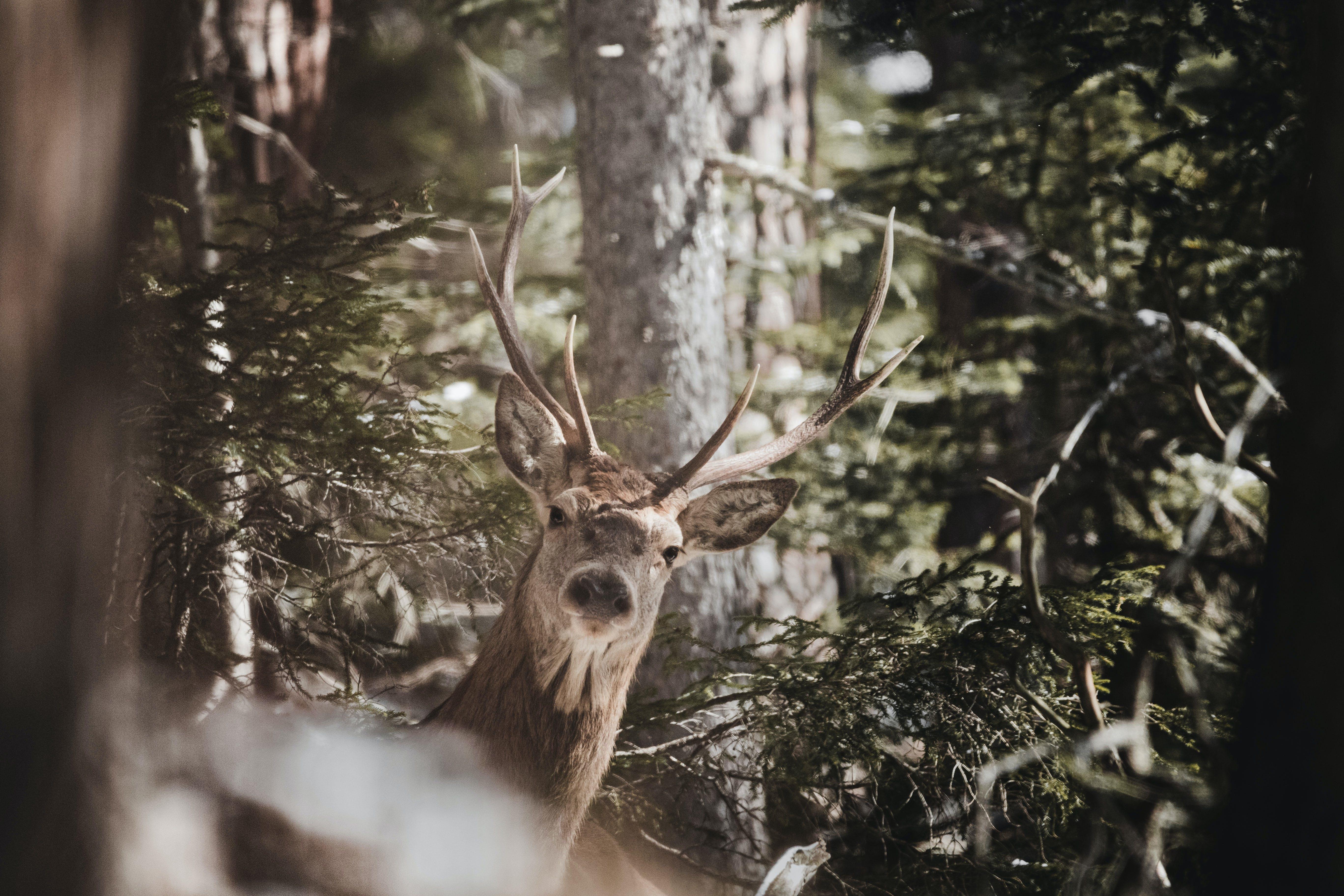 ağaç, ahşap, doğa, dolar içeren Ücretsiz stok fotoğraf