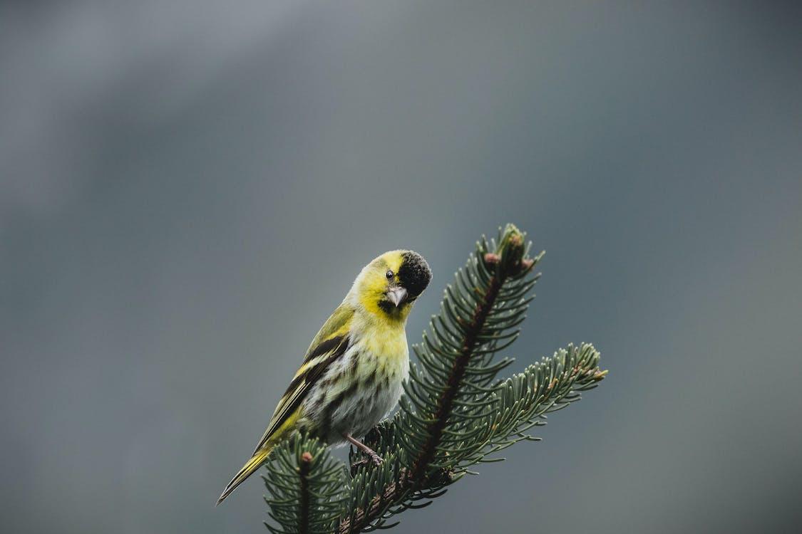 Immagine gratuita di albero, ambiente, animale
