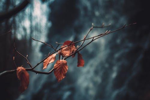 가벼운, 가지, 마른 나뭇잎, 어두운의 무료 스톡 사진
