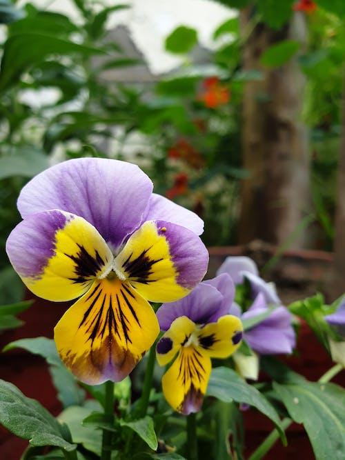 Darmowe zdjęcie z galerii z bokeh, bukiet kwiatów, dwa