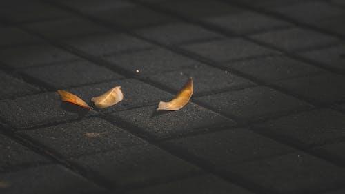 Gratis arkivbilde med 4k-bakgrunnsbilde, blader, falne blader, fokus