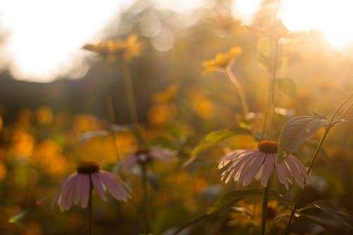 Ảnh lưu trữ miễn phí về hệ thực vật, hoa, thực vật, vườn