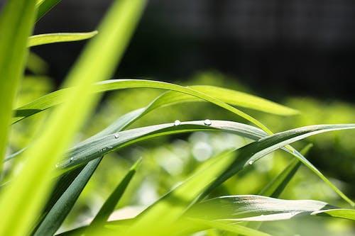 工厂, 廠, 濕, 綠色 的 免费素材照片