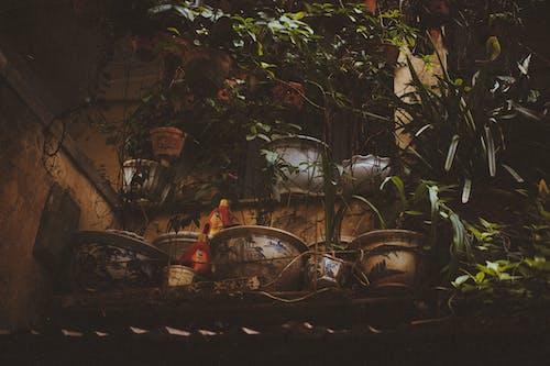 Gratis arkivbilde med anlegg, dagslys, gryter, grønn