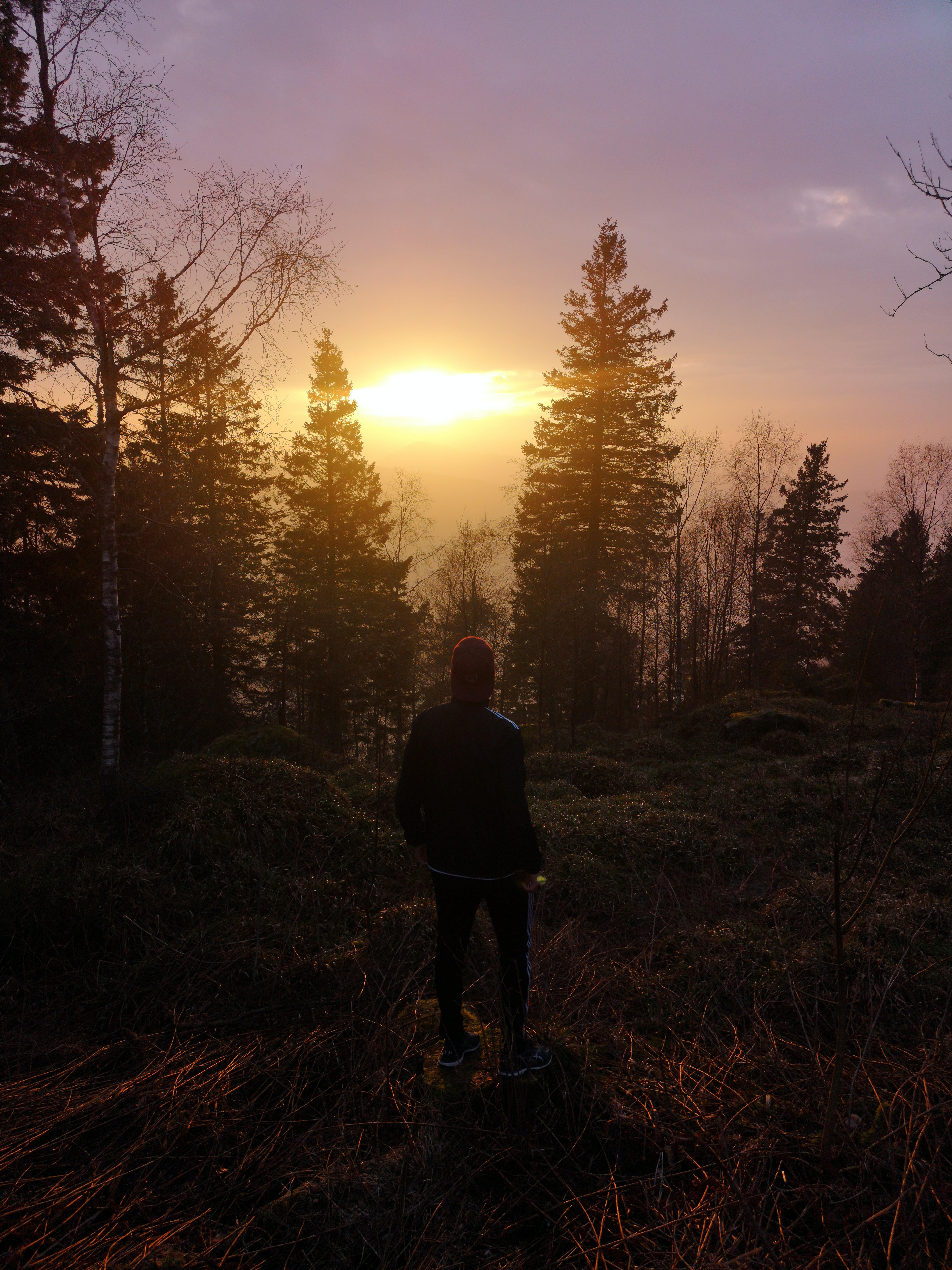 Standing Man Near Trees during Sunset