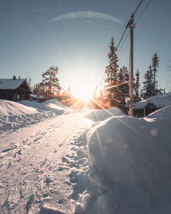 arbres, capvespre, cobert de neu
