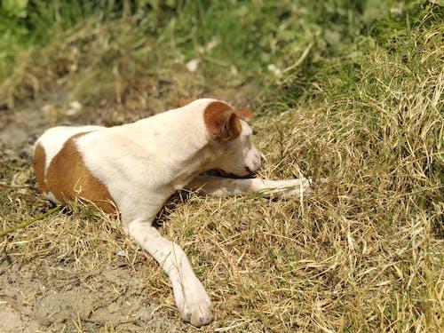 Fotos de stock gratuitas de Labrador, mascotas, perro, perro callejero
