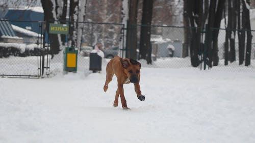 Fotos de stock gratuitas de perro