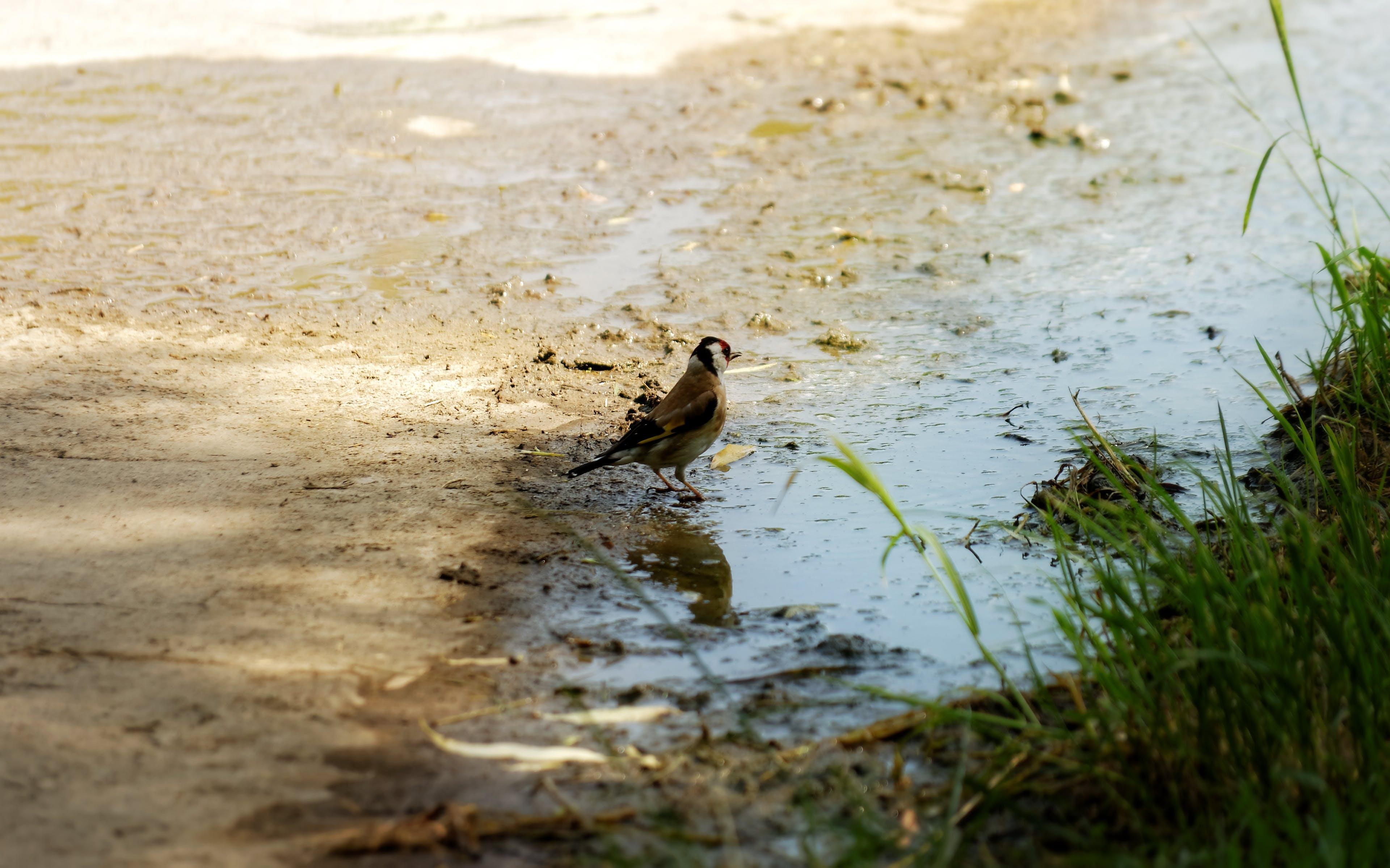 Free stock photo of grass, muddy, nature, pond