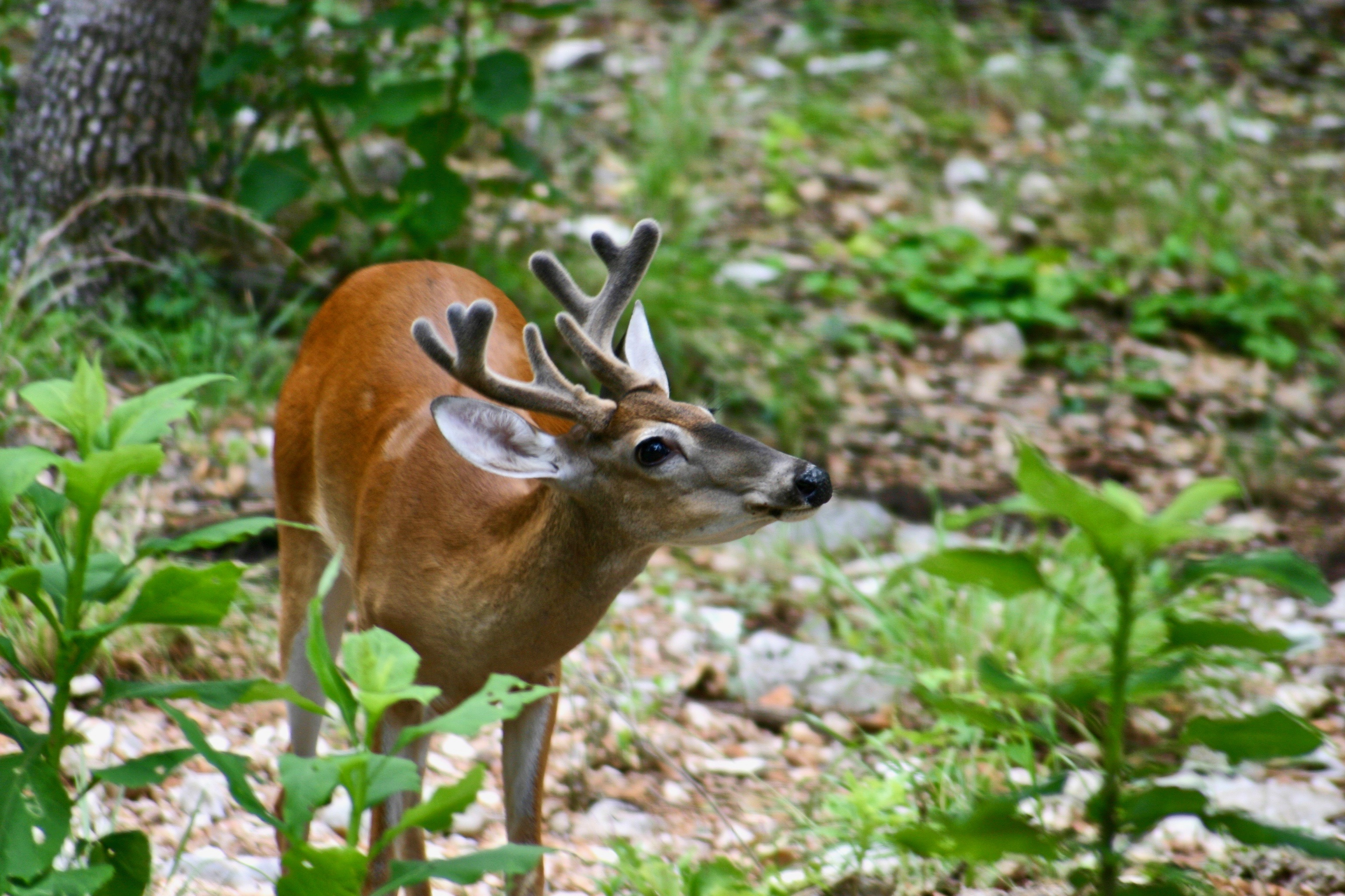 Deer Standing Near Plants