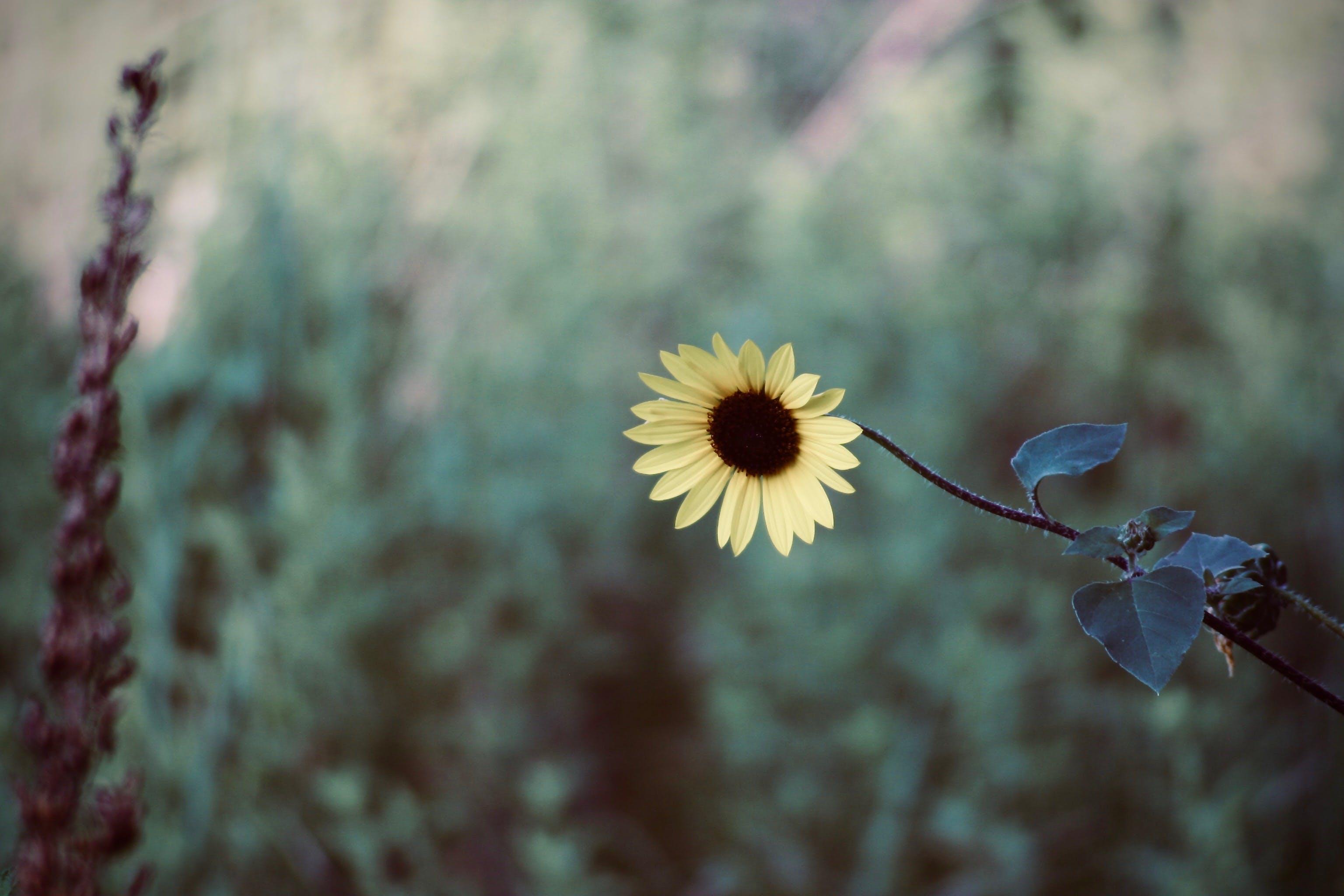 Immagine gratuita di bocciolo, fiore, flora, macro