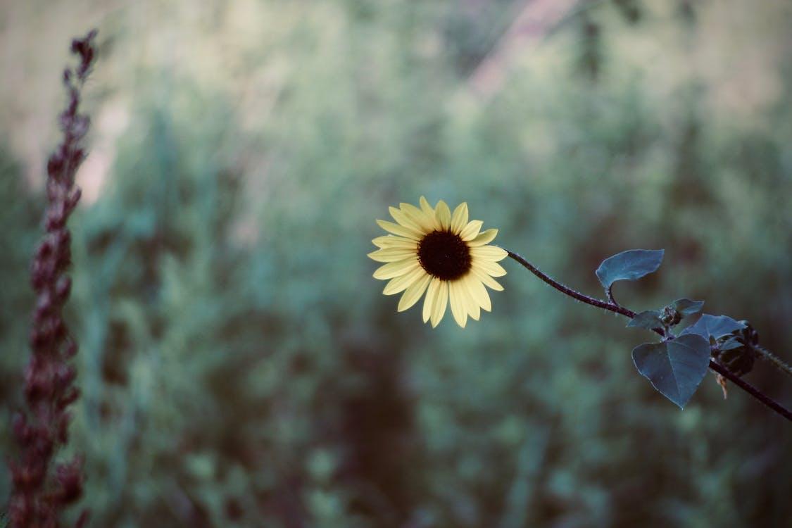 квітка, макрофотографія, пелюстки
