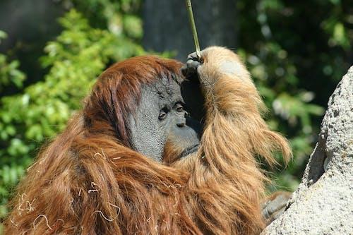 Kostnadsfri bild av däggdjur, djur, djurfotografi, djurpark