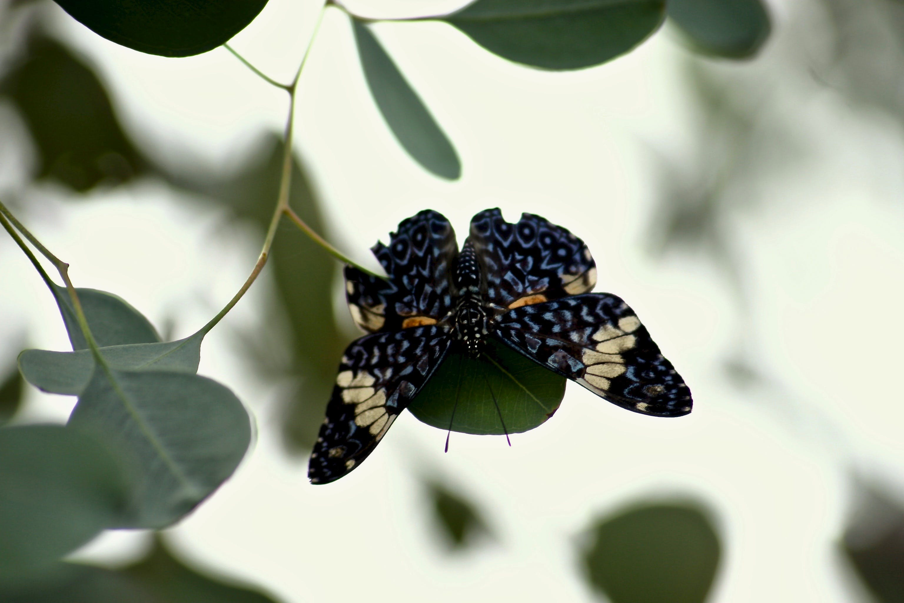 Black and Brown Butterfly Perched on Leaf