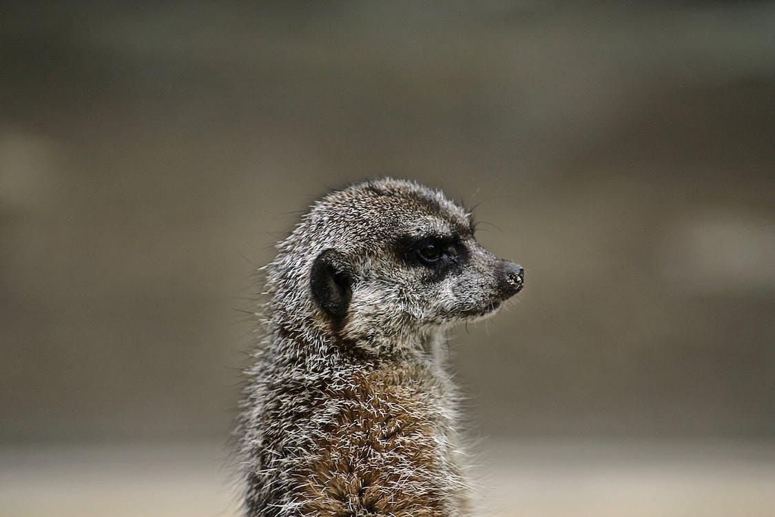 dzika przyroda, fotografia zwierzęcia, makro