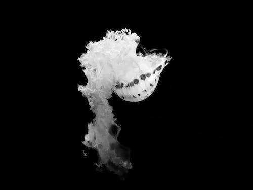 deniz, hayvan, okyanus, siyah ve beyaz içeren Ücretsiz stok fotoğraf