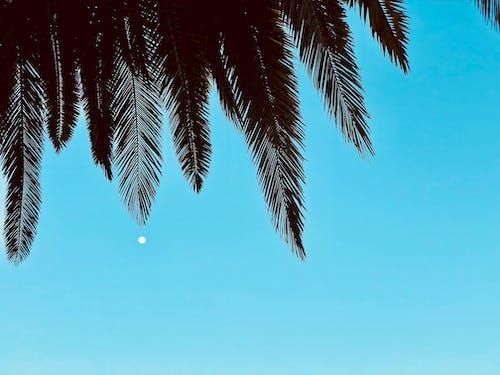 Darmowe zdjęcie z galerii z drzewo, drzewo kokosowe, drzewo palmowe, raj