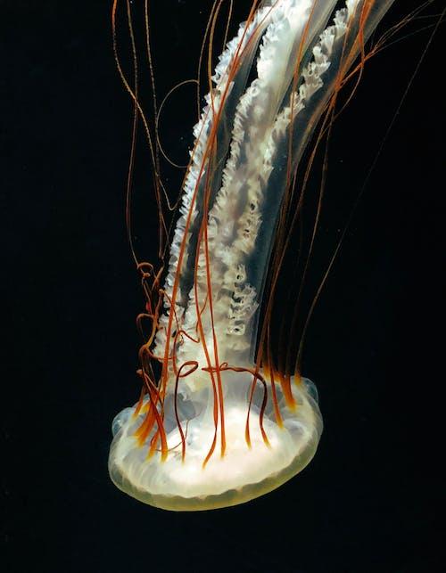 Darmowe zdjęcie z galerii z dzika przyroda, podwodny, zwierzę, zwierzę wodne