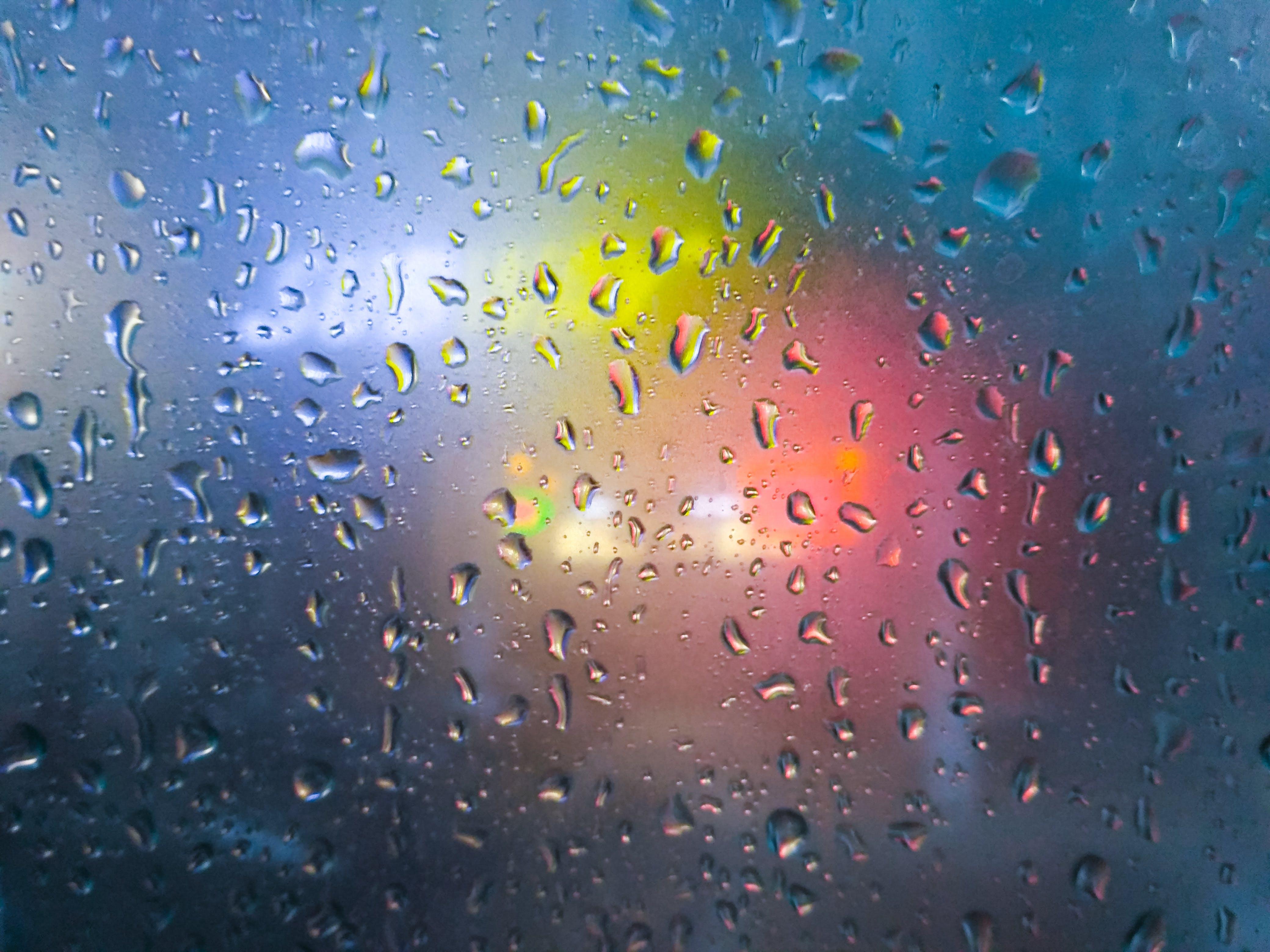 after the rain, natue, rain drops