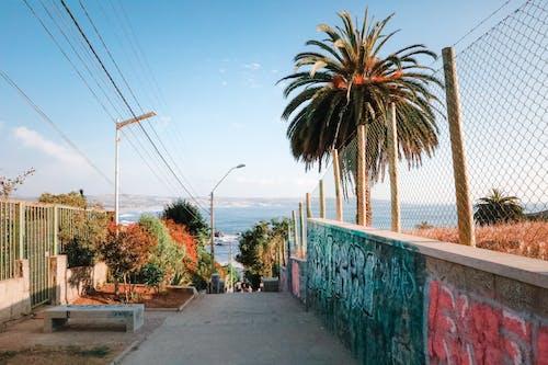 假期, 围栏, 塗鴉, 夏天 的 免费素材照片