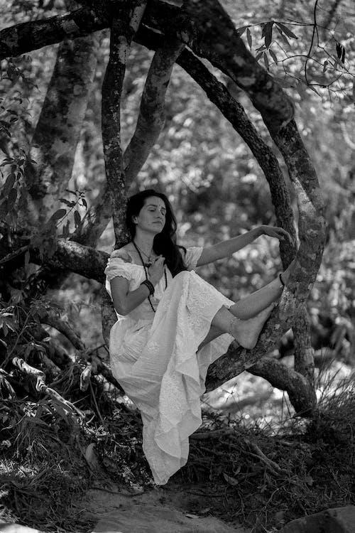 Fotos de stock gratuitas de arboles, blanco y negro, bosque, desgaste
