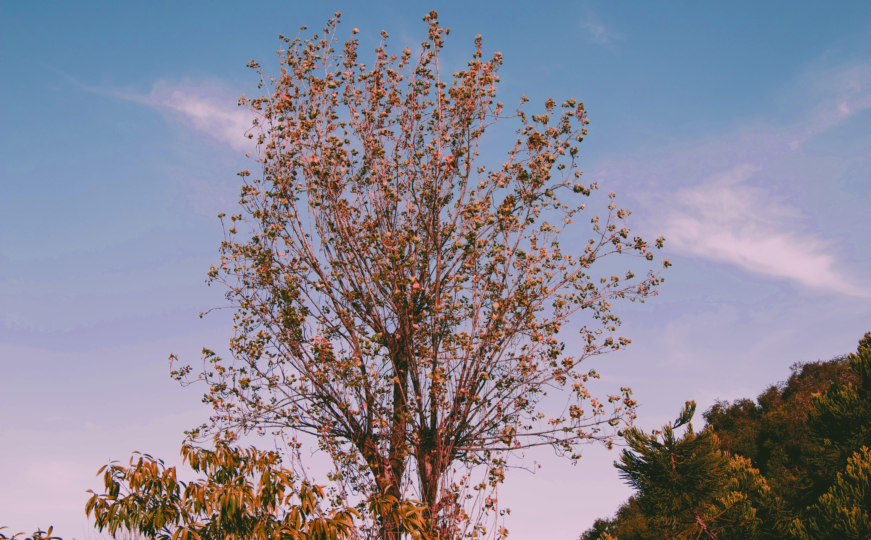 Free stock photo of blue sky, tress