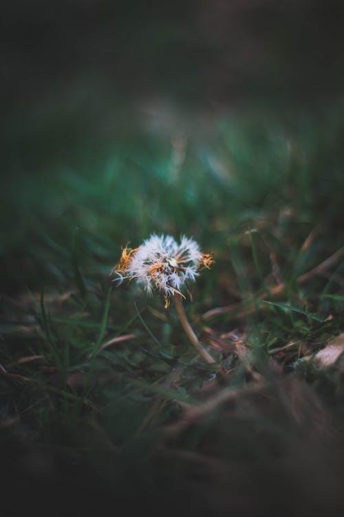 Immagine gratuita di bianco, fiore