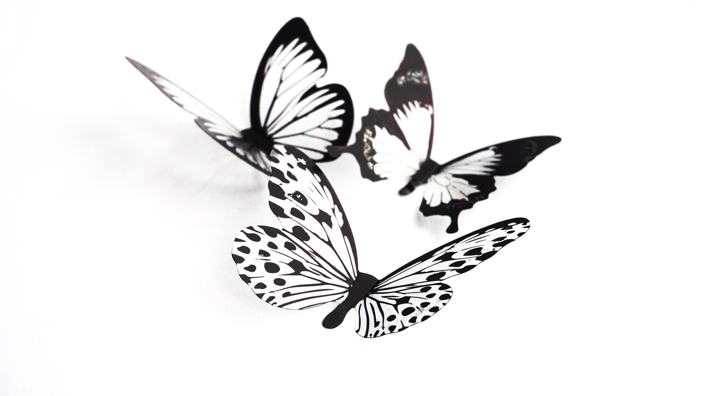 Free stock photo of art, butterflies, close up, crafts