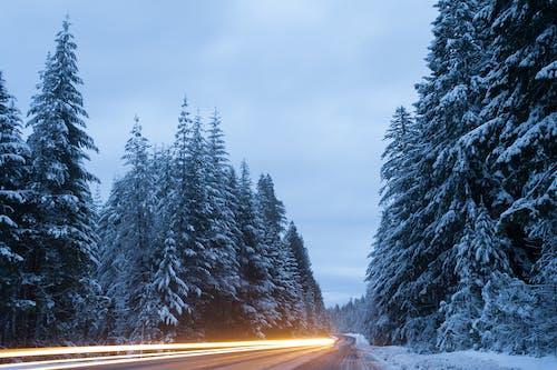 คลังภาพถ่ายฟรี ของ ต้นไม้, ถนน, ป่า, ฤดูหนาว