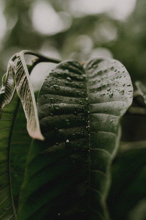 增長, 水滴, 濕, 特寫 的 免費圖庫相片