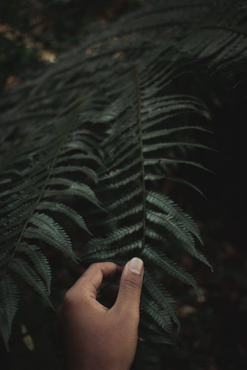 Základová fotografie zdarma na téma kapradina, rostlina, ruka