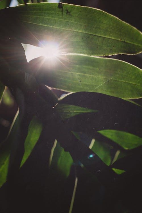 廠, 陽光 的 免費圖庫相片