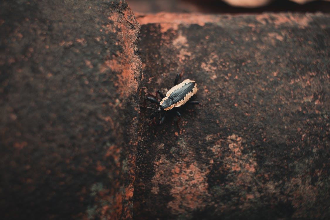 小, 小蟲, 昆蟲