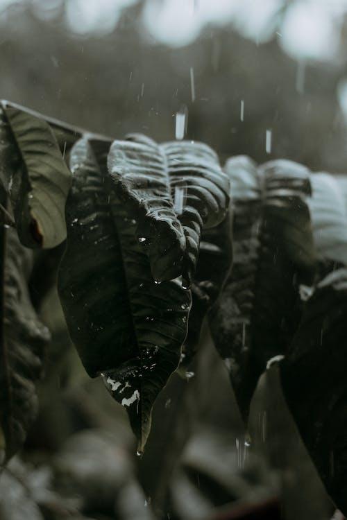 Gratis stockfoto met depth of field, fabriek, nat, regen